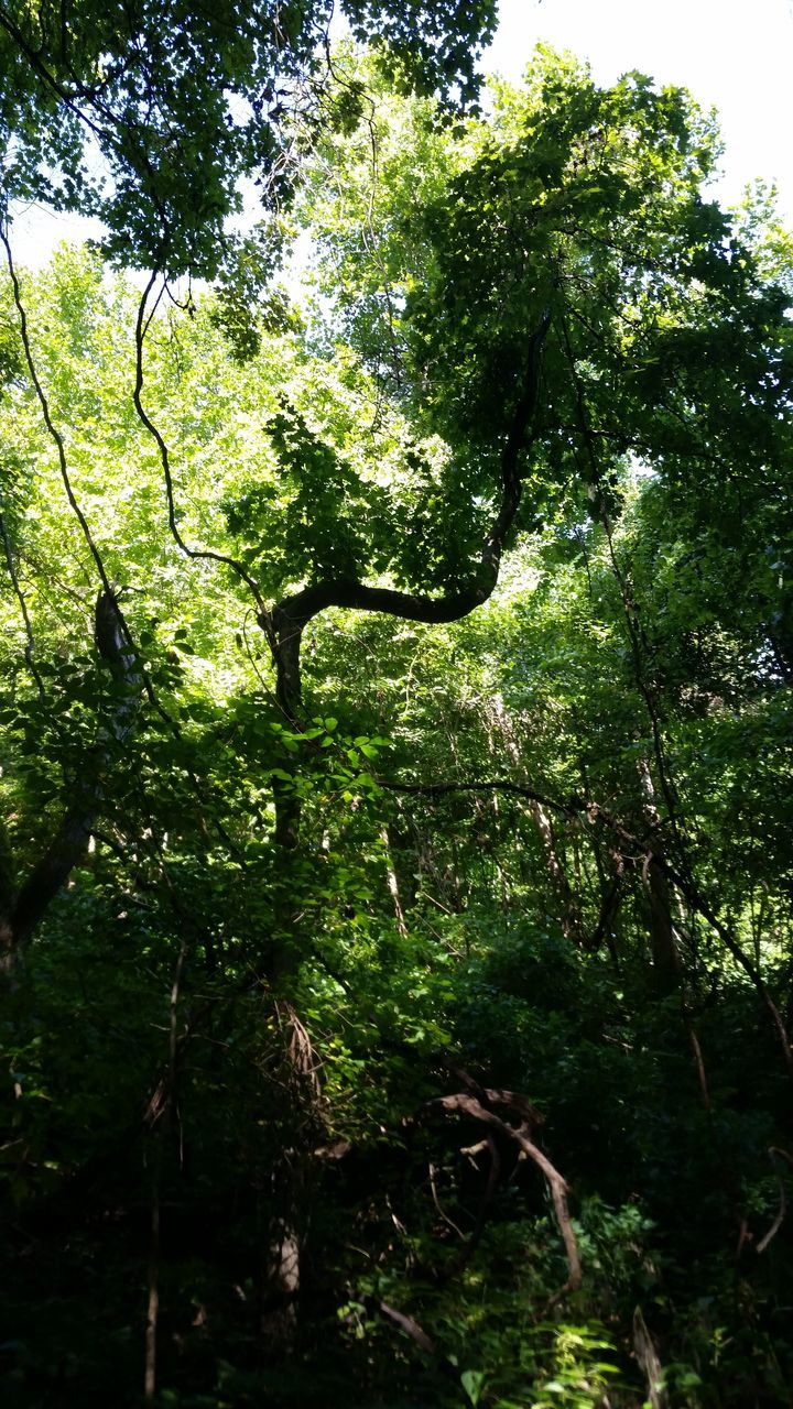 tree, nature, growth, tranquility, forest, beauty in nature, branch, day, outdoors, no people
