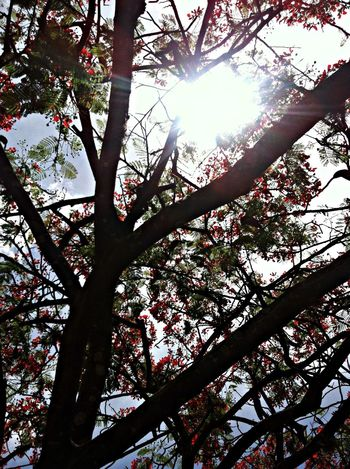After the rain, be inspired by Flamboyant. Cerrado Nature Trees Outside