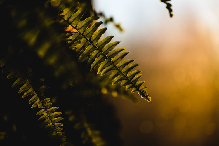 Plant Leaf Plant Part Growth Close-up Beauty In Nature Tree Focus On Foreground No People Selective Focus Nature Green Color Fern Tranquility Day Outdoors Branch Freshness Water Fern Leaves Sunset Beauty In Nature