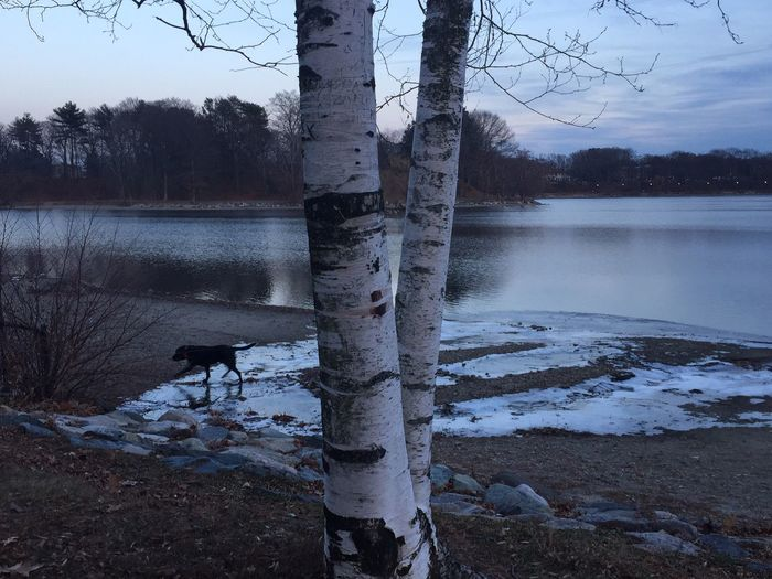 Birch trees series Shades Of Winter Winter Solstice Landscape Nofilter