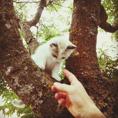 Cute Kitten Adorable Kitten<3 Cat♡ Baby Cat <3