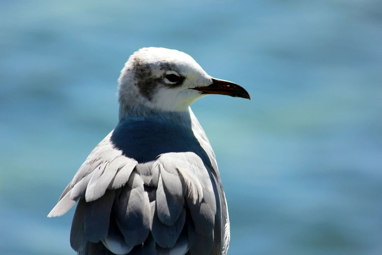 Freedom Salt Life⚓ Birds🐦⛅ Love Nature❤ Close-up Happy Birds Sweet Face Blue Deep Water Awesome Colors