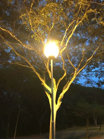 Tree Plant Nature No People Illuminated Growth Beauty In Nature Branch Sunlight Outdoors Lens Flare Light