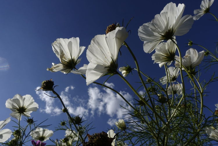 Flowers, Nature And Beauty Sky Nature Sunny
