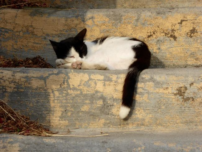 Cat Cats Sleeping Cat Cats Of Rhodes Rhodes Greece Rhodes Old Town, Greece Sleepy Sleeping Sleeping Beauty Black And White Cat Kitten Blackandwhitecat Beautiful Cat Black And White Black&white Blackandwhite Pink Paws Pinkpaws At Peace Cat Lovers Catlove Catlife It's A Cats Life Itsacatslife Picture Perfect