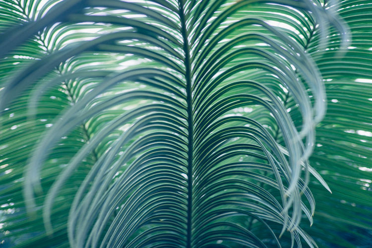 Israel Israel Green Color Growth Close-up Plant No People Beauty In Nature Nature Day Outdoors Leaf Plant Part Full Frame Palm Tree Backgrounds Palm Leaf Tree Tropical Climate Frond Pattern Natural Pattern