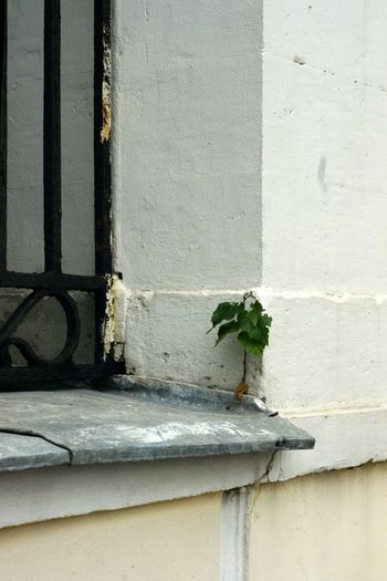 Small tree on windowsill Tree Architecture Birch Tree Building Exterior Built Structure Close-up Day Fragility Freshness Growth Leaf Nature No People Outdoors Plant White Color Window Window Box Window Guard берёзка