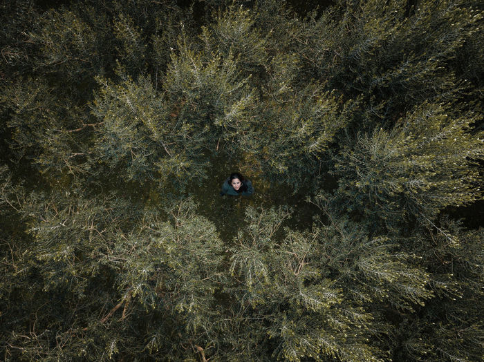 Directly above of woman in forest