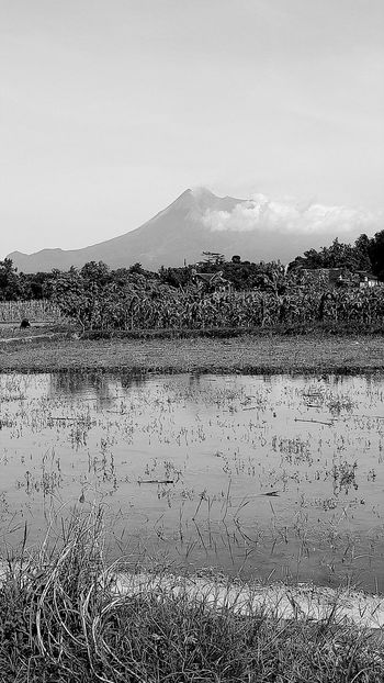 Merapi view Blackandwhitefriday Blackandwhite Photography Landscapes Nature_collection Eyeam_bestshot Beauty In Nature Sky Scenics Field Day Outdoor Photography Agriculture Water Outdoors Eyeam Take Photo EyeEmBestPics Eyeam Select