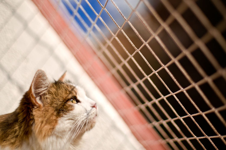 Cat Watching Housecat Mesh Animal Animal Body Part Animal Head  Animal Themes Balcony Cage Cat Cat At Home Close-up Contemplation Domestic Animals Domestic Cat Feline Looking Looking Away Net Netting No People One Animal Pets Protection Safety