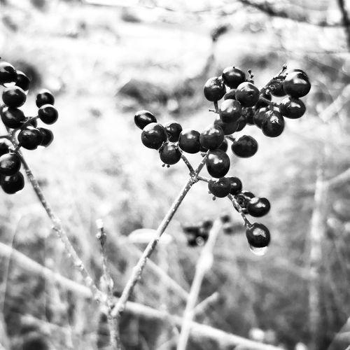 Berries Fruit