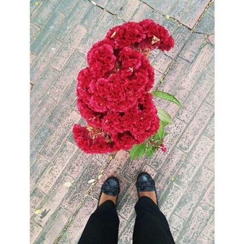 """""""Como siempre: Lo urgente no deja tiempo para lo importante"""" Flower Beautiful Gardenatwork Gladpm Delimamarsh Menga Cali Colombia Tardecaleña Huawei Vscocam"""