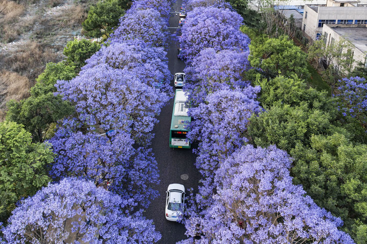 High angle view of purple flowering plants in park