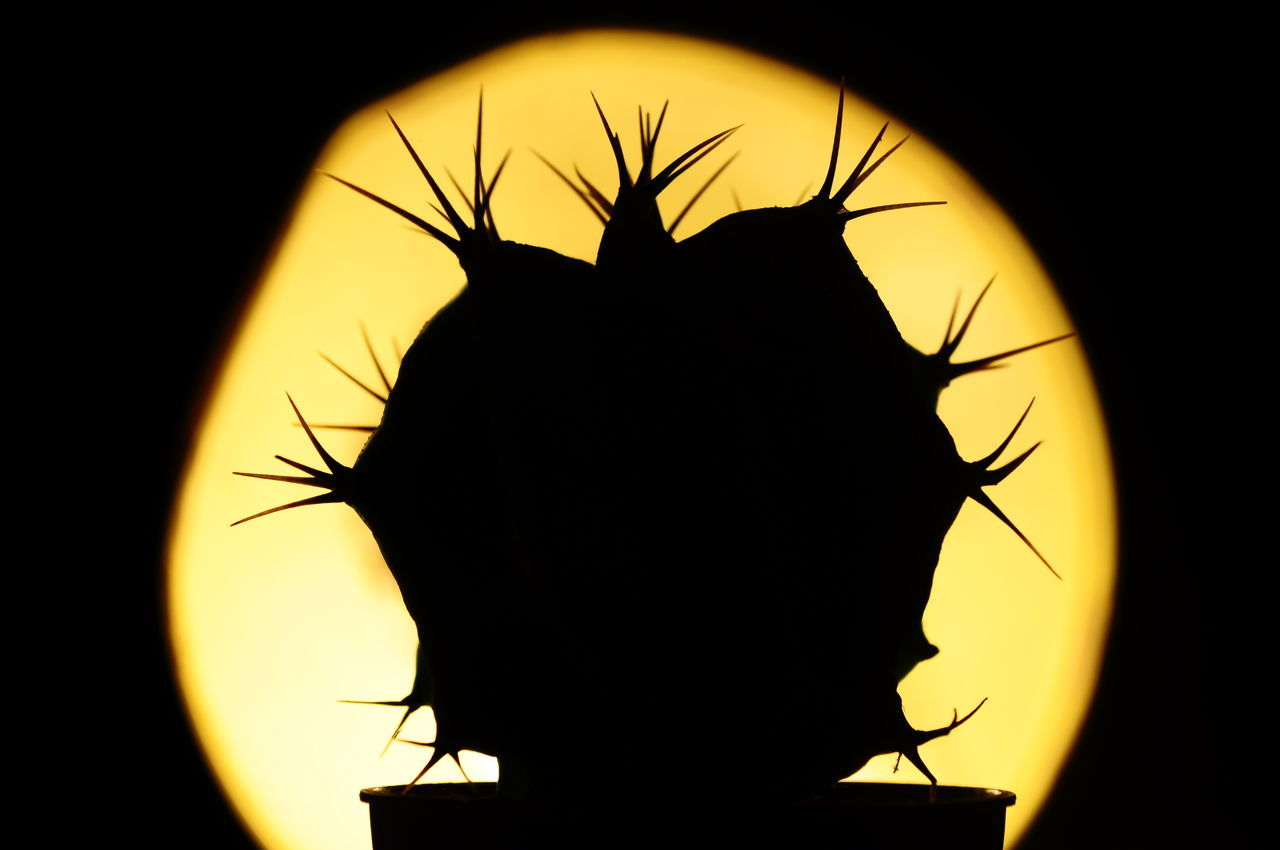 silhouette, sunset, insect, clear sky, night, yellow, animal themes, animals in the wild, close-up, no people, outdoors, sky, nature, space, flower head, astronomy