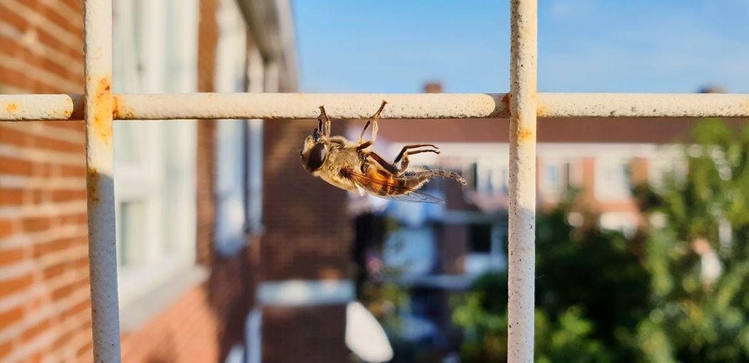 #eyembestshot #EyeEm #insect #Wings #nl #delft #samsungphotography #natureatmydoorstep #closeup #samsungmobilephotography #galaxys9plus #MobilePhotography #ladyphotographerofthemonth #sunbathing #nopeople #Nature  #naturephotography #balconybugs Insect