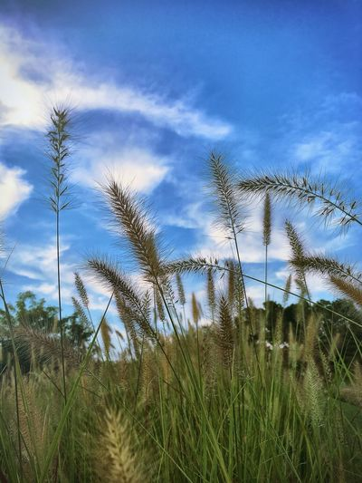 Just wandering around looking for cool bugs and snakes. 🐍 🕷 Nature Beauty In Nature Grasses In The Wind Afternoon Summer Sky Clouds And Sky Textures And Surfaces Plants Walking Around Taking Photos Quiet Moments Breeze Outdoors Growth Low Angle View Tranquil Scene Landscape Tranquility Field Close-up