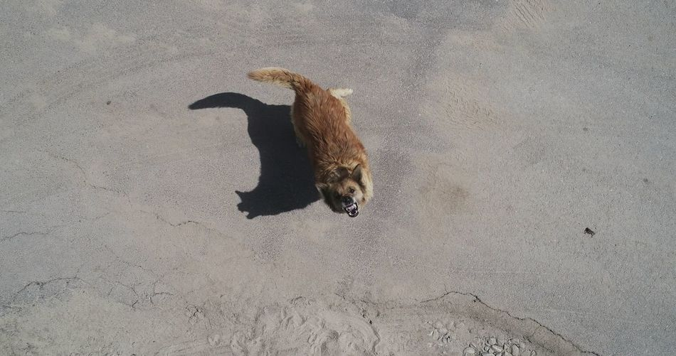Dog Aerial Photography High Angle View Shadow Dog Lead Canine