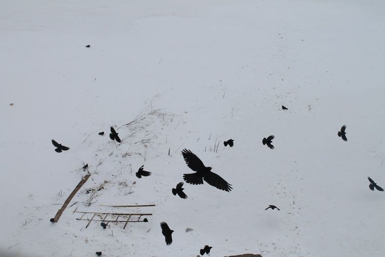 High angle view of birds on snow covered land