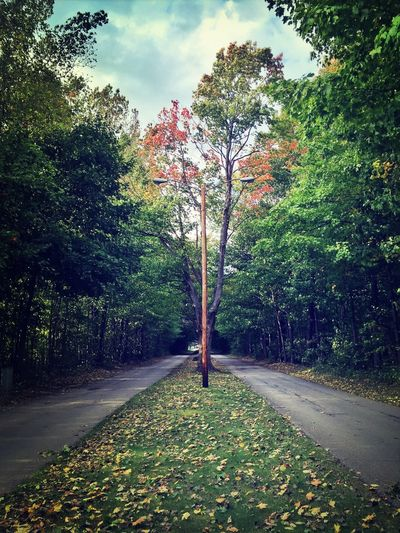 Green Road Trees