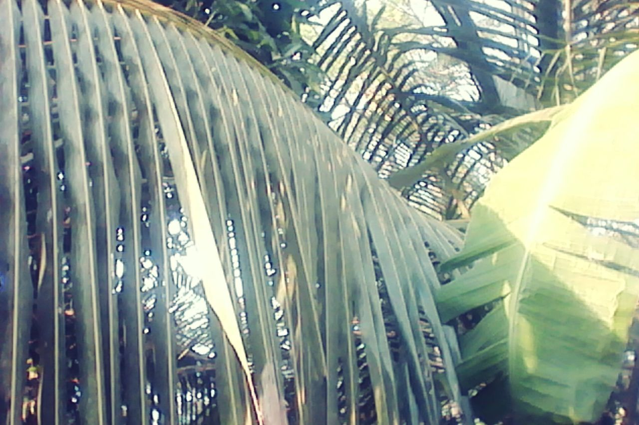 tree, day, no people, leaf, green color, outdoors, growth, palm tree, nature, banana tree, close-up