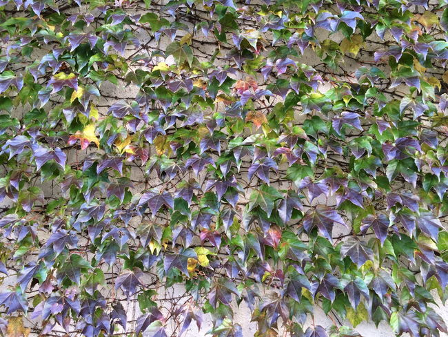 Japan Leaf Nature Plant Tokyo Wall