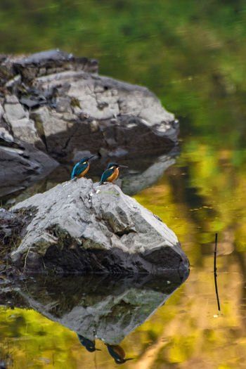 View of birds on rock