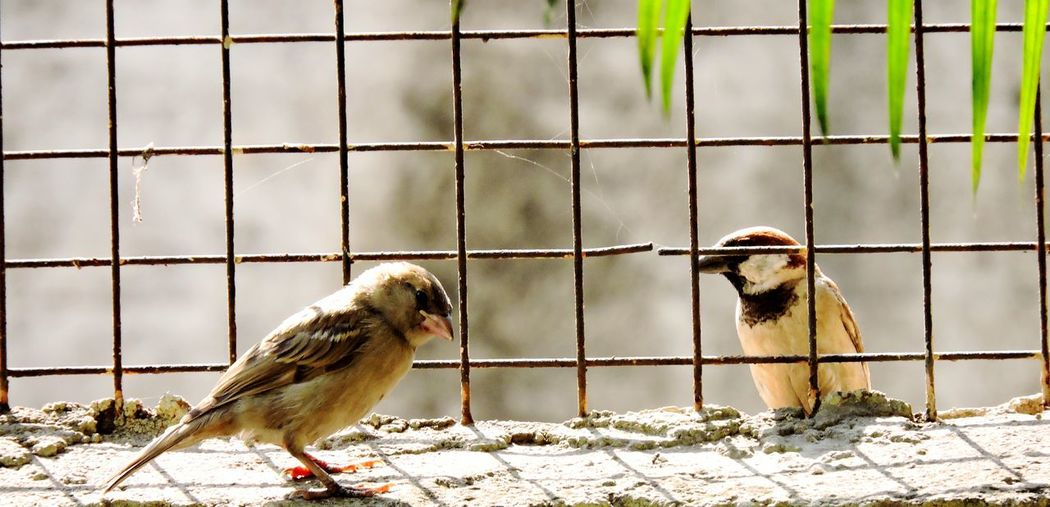 Sparrows perching on retaining wall
