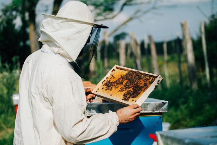 Beekeeper examining beehive