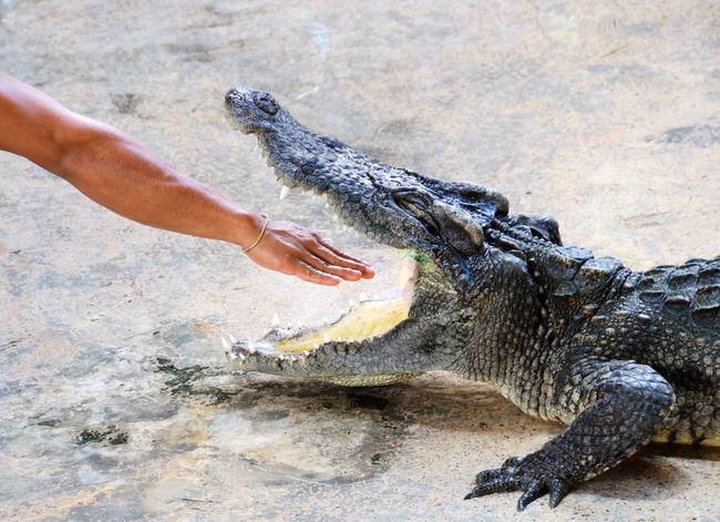 Crocodile Dangerous EyeEm Bestsellers