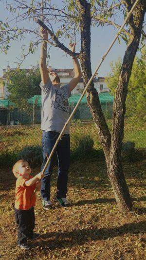 enseñando a mi sobrino a recoger almendras... en Taradell Osona Barcelona Catalunya World Enjoying Life Me