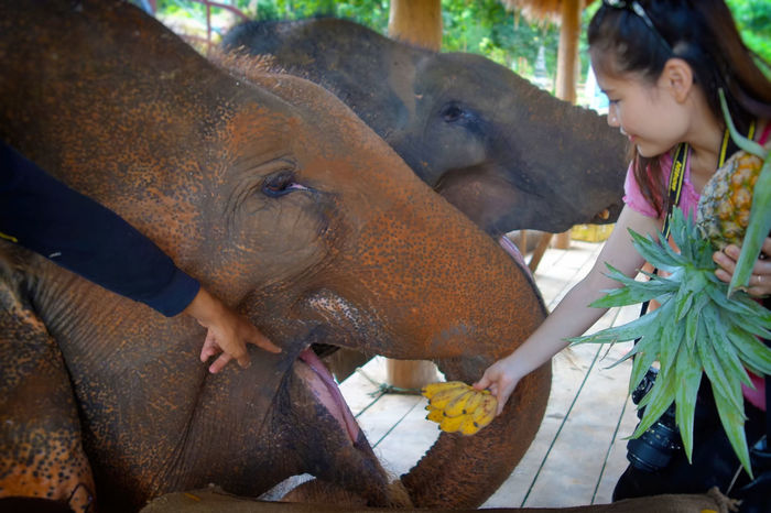 #cute Pet Portraits Animal Themes Day Elephant Mammal One Animal One Person Outdoors People Mix Yourself A Good Time The Week On EyeEm Laos Laos Travel Luangprabang Luang Prabang Paint The Town Yellow Connected By Travel