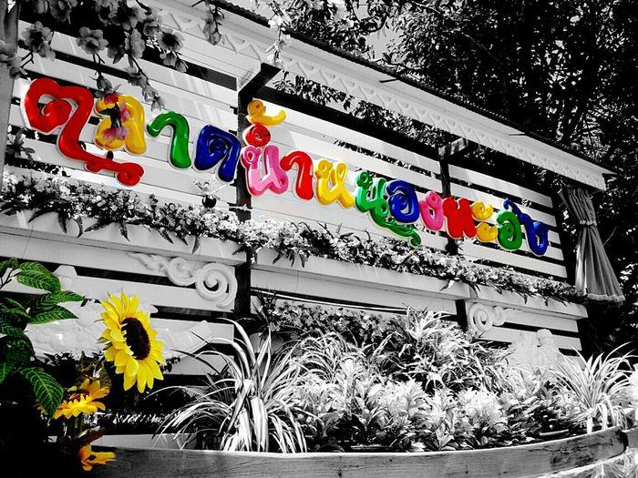 Open Saturday-Sunday from 07.00 - 17.00 . Sky Enjoying Life Instadaily Photooftheday Naturephotography Tavelgram Samutsakorn Emeyebestshot Eyem Gallery Phonetography Photo Phonecamera EyeEm Best Shots Samsungphotography Eye4photography  PhonePhotography Cymera EyeEm Thailand EyeEm Best Edits EyeEm EyeEm Gallery Picture Thailand Hollidays ตลาดน้ำหนองพะอง