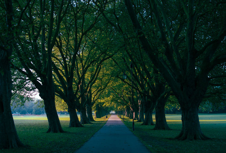 Empty pathway along trees