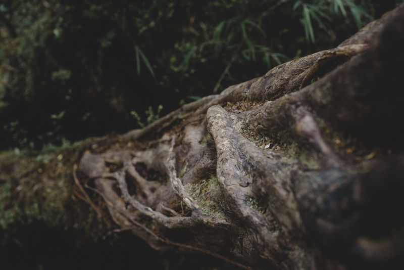Parque Nacional de Chiloé. Tree Animal Wildlife Plant Animals In The Wild Reptile Animal Themes Animal Nature No People Forest Tree Trunk Close-up Outdoors
