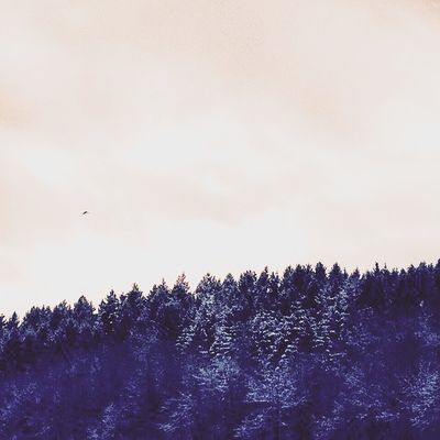 Winter Forest Snow Trees Filter Nature Sky Clouds Horizont  Switzerland