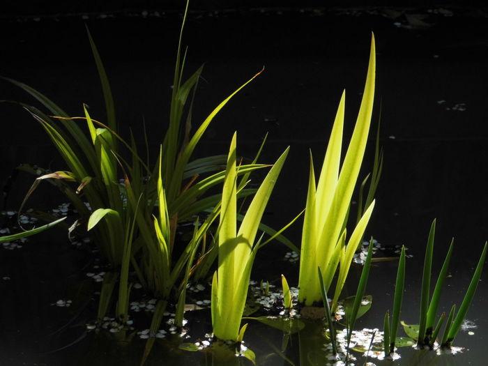 Close-up of plants by lake at night