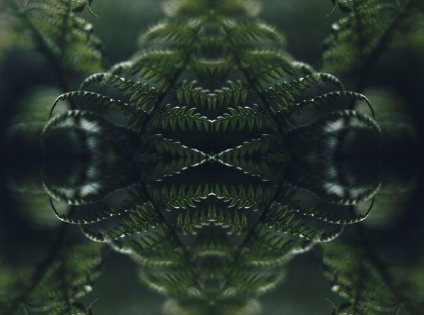 Art Closeup Dark Farn Green Nature Pattern Plant