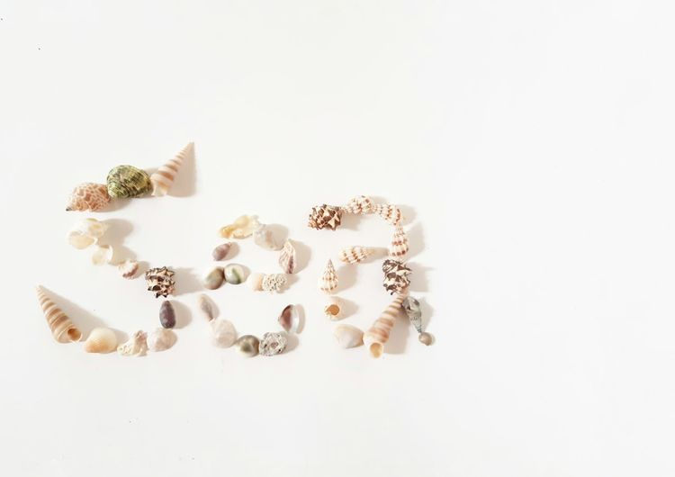 sea summer background Sea Seashell Traveller Travelphotography Shell White Background Studio Shot Close-up Mussel Clam Animal Shell