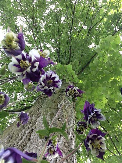 EyeEm Best Shots Beautiful Day Flower Hugging A Tree
