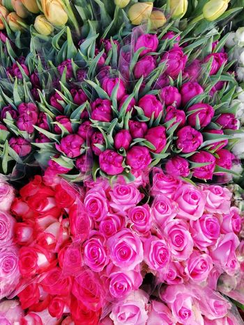 Tulips Abundance Bunch Of Flowers Close-up Flower Flower Arrangement Flower Head Flower Market Freshness Full Frame High Angle View Inflorescence Large Group Of Objects Market Petal Pink Color Retail  Roses