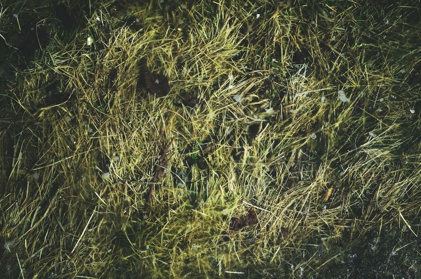 Backgrounds Full Frame Close-up Nature Beauty In Nature No People Outdoors Grassy Agriculture Winter Low Angle View Growth Season  Miles Away Water Season  View From Above Puddle Wet Pattern Submerged Grass Bubbles Country Living Patterns
