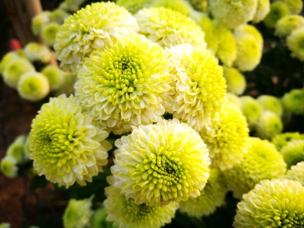 Close Up Plants 🌱 Neture Flower Plant Beauty In Nature Fragility Freshness Nature Close-up Flower Head Outdoors Growth Day