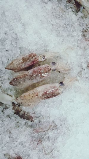Fresh squid SEAFOOD🐡 Deepfreeze Freezing Buying Power No People Day Textured  Backgrounds Close-up Outdoors Nature Animal Themes