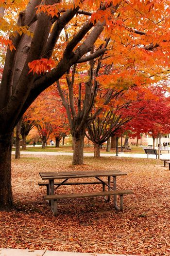 Fall. Autumn Season  Change Tree Orange Color Tree Trunk Park - Man Made Space Branch Bench Tranquility Scenics Tranquil Scene Nature Beauty In Nature Park Bench Outdoors Growth Day Park Vibrant Color Nature