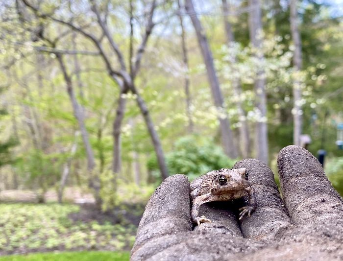 Close-up of lizard on rock in forest