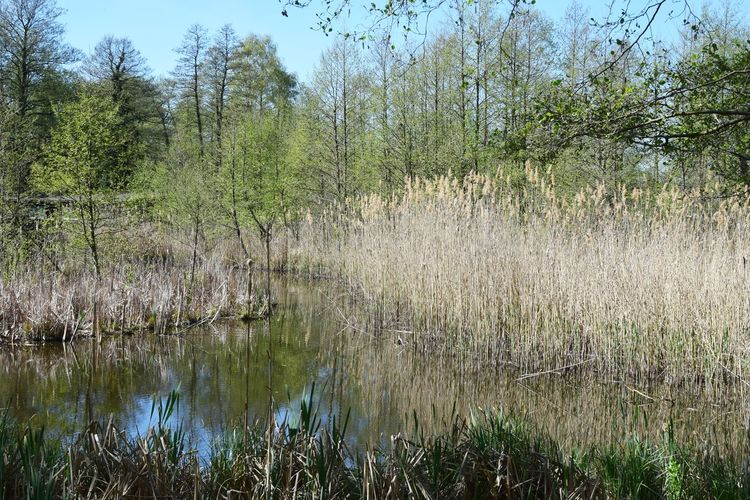 Die Seelodge Kremmen ist eingebettet in die wunderbare Natur eines Feuchtgebietes. Plant Tree Water Tranquility Beauty In Nature Growth Reflection Lake Tranquil Scene Forest Land Scenics - Nature Nature No People Grass Day Non-urban Scene Landscape Outdoors Swamp Naturelovers