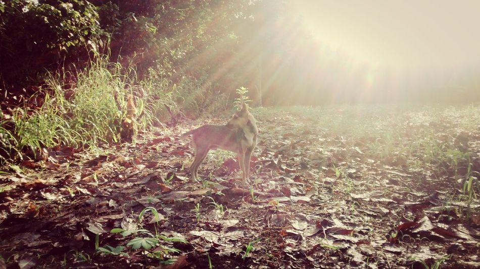 EyeEm Best Shots - Nature Pets Dog Lover EyeEm Best Edits