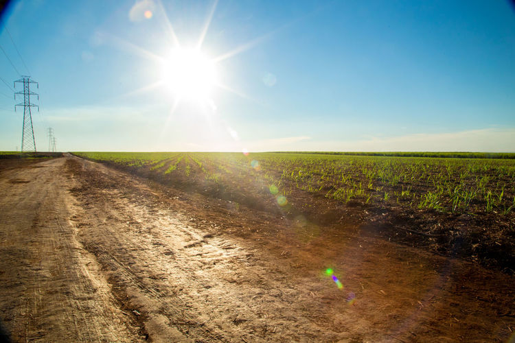 Agriculture Beauty In Nature Clear Sky Day Field Growth Horizon Over Land Landscape Lens Flare Nature No People Outdoors Plowed Field Rural Scene Scenics Sky Sugar Cane Sun Sunbeam Sunlight Tranquility