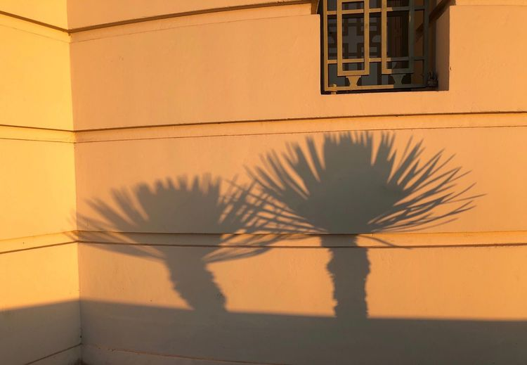 Shadows at sunrise Wall - Building Feature Shadow Built Structure Architecture Window Building Exterior California Dreamin Sunlight