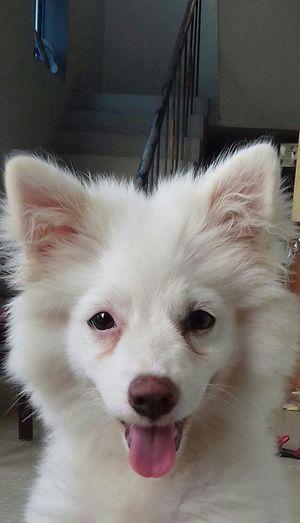 Close-up I Love My Dog Indoors  Looking At Camera Pets